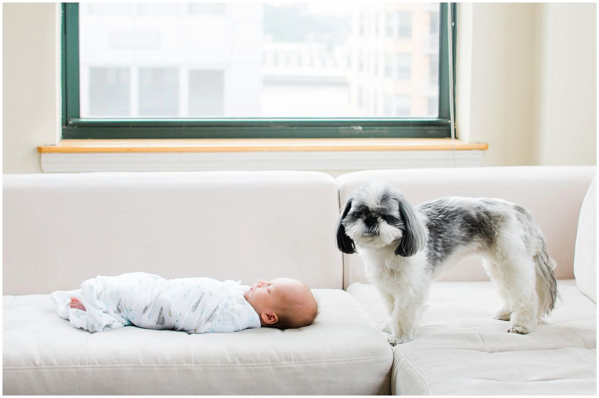 a dog guarding newborn baby on the couch in Hoboken NJ apartment while posing for newborn photography