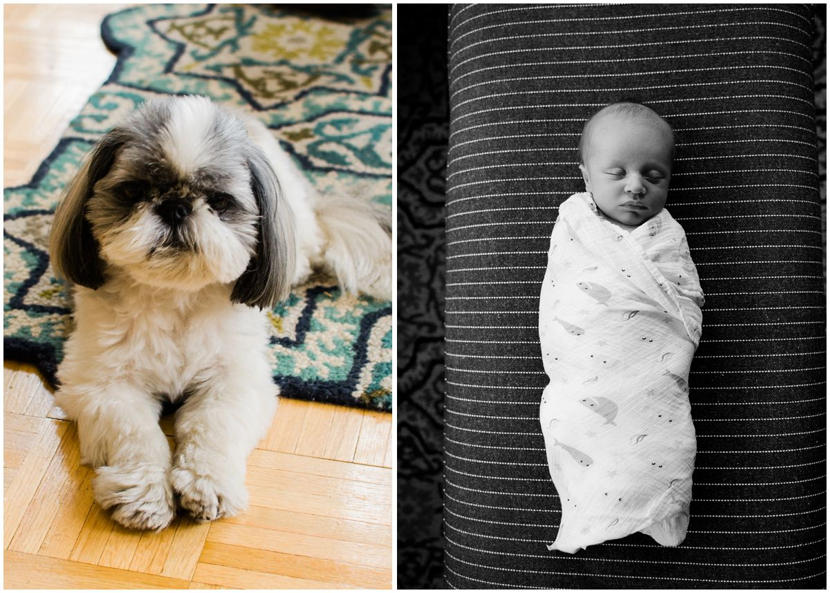 baby boy swaddled in a blanket in his living room and the family dog looking in camera in Hoboken NJ
