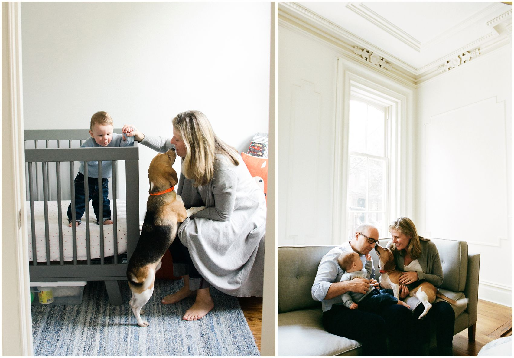 cute dog in the family portrait with pets