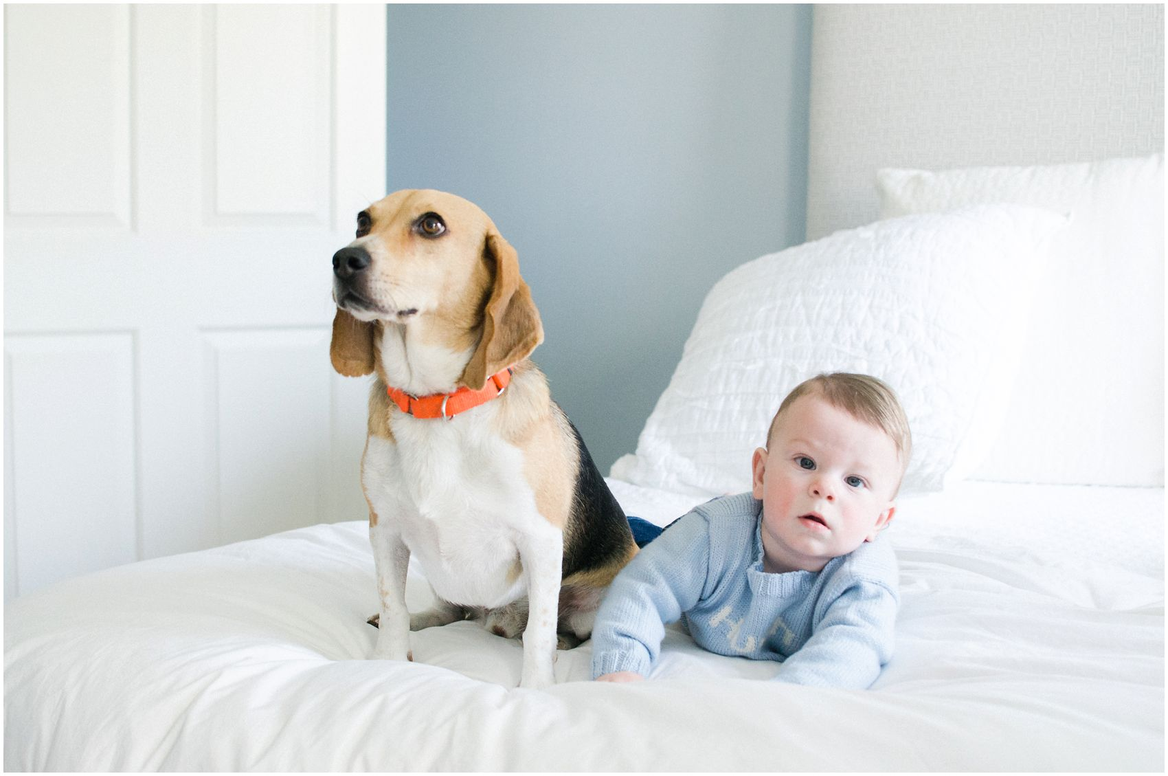 baby and the dog pose as the best friends for a family portrait with pets