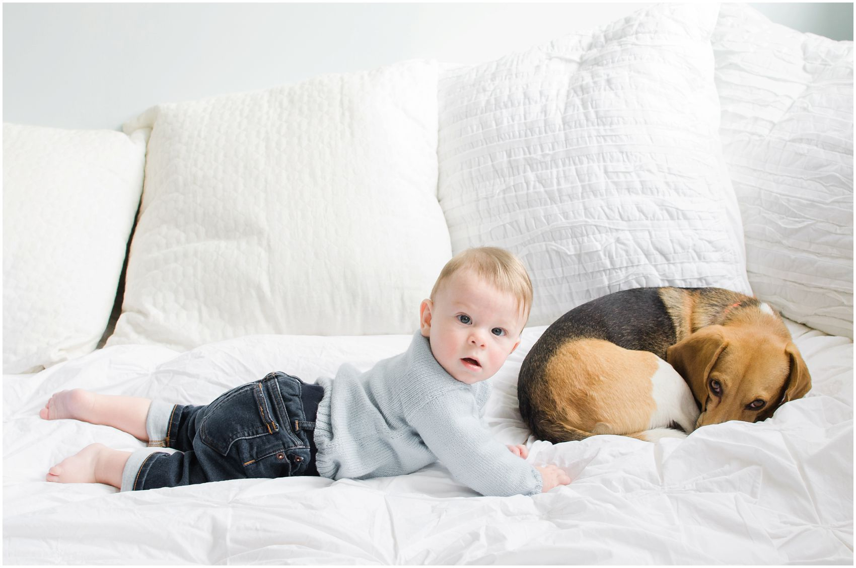 baby boy with his brown dog in a family portrait with pets