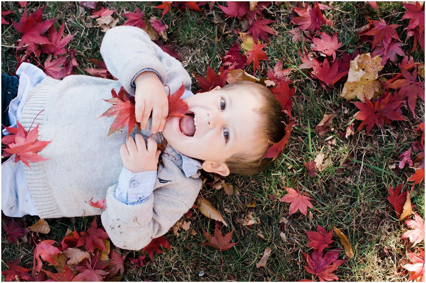 a little boy laughing on the ground and playing with red fall leaves in Rockland County, NY