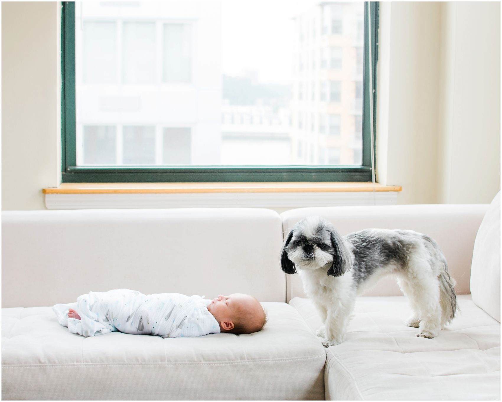 cute little dog is standing next to baby boy on a living room couch
