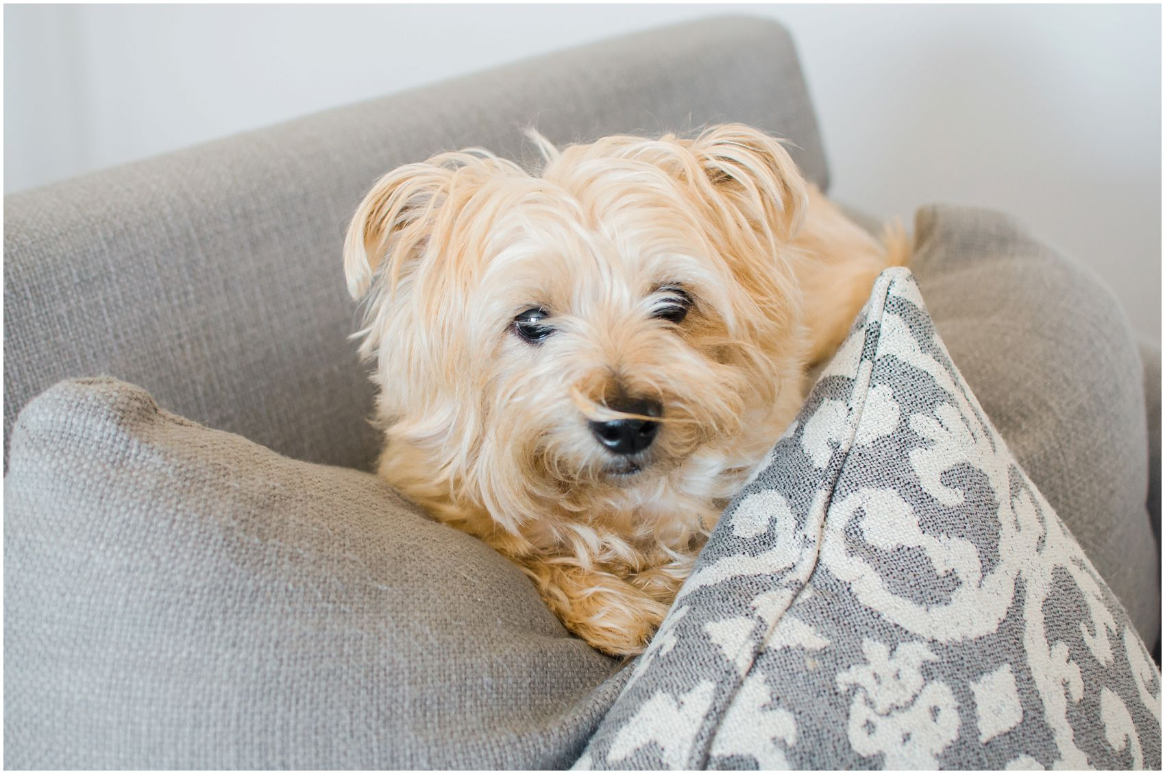 Including personal items such as a fluffy family dog in a newborn family session in NYC