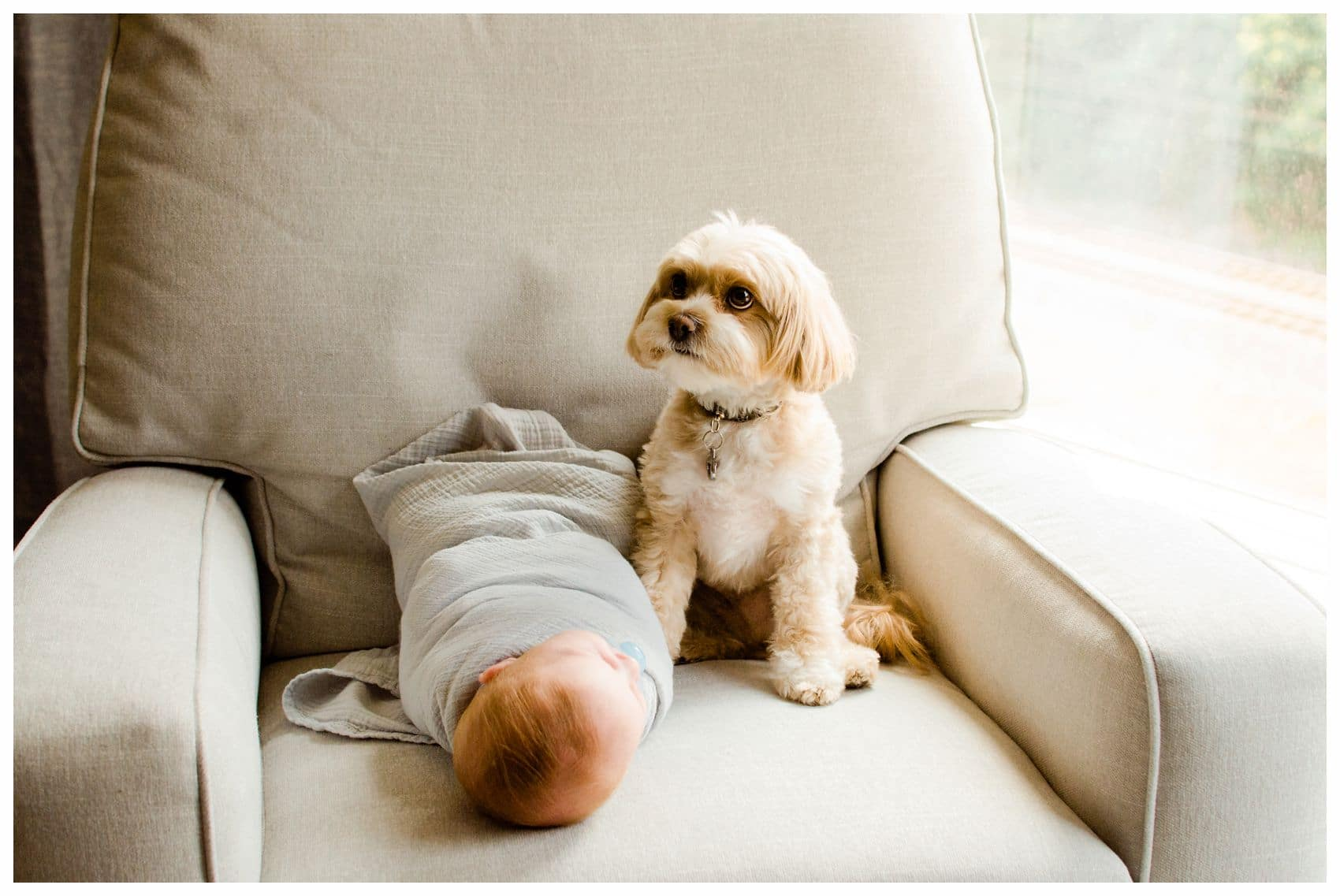 Best newborn photographer Miriam Dubinsky shares a newborn baby boy with his family dog on a chair